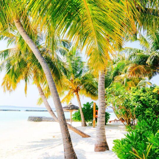 https://pettey-tredoux.co.za/wp-content/uploads/2020/06/Flipping-Dolphins-And-Glorious-Sunsets-At-The-Kurumba-Maldives-540x540.jpg